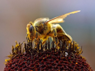 Cell phones are killing bees.
