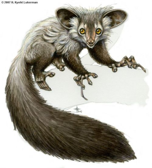 fuckyeahlemurs:   (via Aye-aye in markers by ~kyoht on deviantART)
