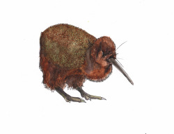 emilyebba:  tmills:  A redundant kiwi.  Let's get morbid. I still think it should be eating a kiwi.   This kiwi kiwi looks like it's wearing culottes.