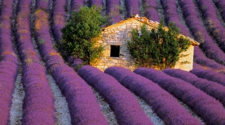 sunsurfer:  Lavender Field Stone House, Provence, France photo via pixdaus