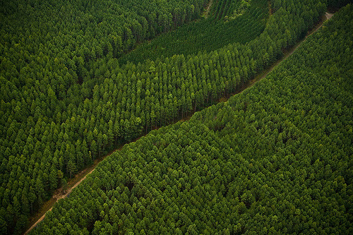 pine forest patterns (by kippendave)