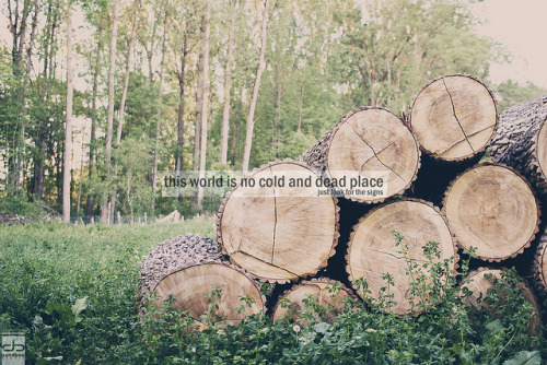 "this world is no cold and dead place on Flickr.Via Flickr:just look for the signs something completely different this time but somehow i liked it :) This Photo is processed with my ""Cherry Haze"" Photoshop action. You can geht the action and a tutorial here: Link I hope you like it though it's pretty different from my usual style :)Canon EOS 550D, Sigma 30mm 1.4 EX DC HSMFacebook - Twitter - Tumblr - Website"