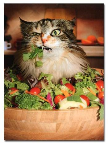vegan cat