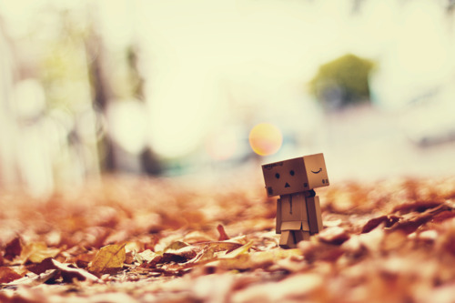 Autumn is here by Leandro, on Flickr.