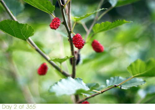 [wildberries]