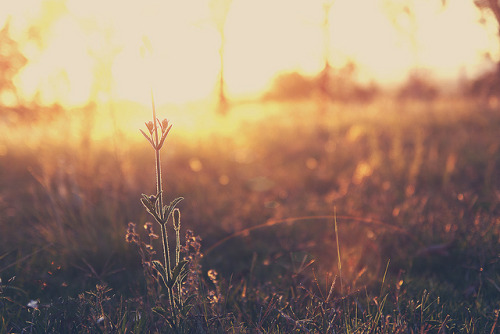 Oh, sun sun sun by Leandro, on Flickr.