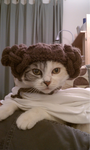 take that off cat. you cannot wear a princess leia costume. you cannot appreciate the greatness of star wars you are a cat. although i bet you never would have given up the location of the rebel base because you would be too distracted by darth vader's cape.