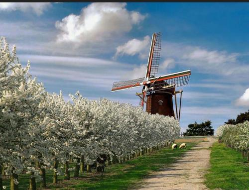 llbwwb:  Spring in Holland by artemis