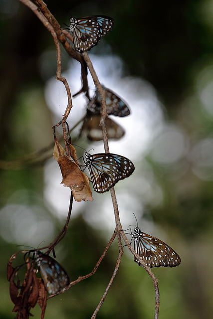 creepicrawlies:  so many butterflies by hig 37  Hello, have a nice week !