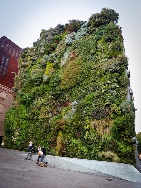 agenerousdesigner:  Vertical gardens by Patrick Blanc  Can't track down where this is - but this Vertical garden makes me happy - wish we had green spaces like this here!