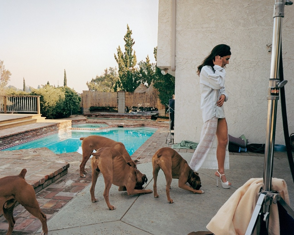 "Larry Sultan ""Boxer Dogs, Mission Hills"" (1998-2002) from the series ""The Valley"""