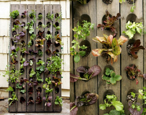 These gorgeous vertical vegetable gardens are made from French riddling racks.