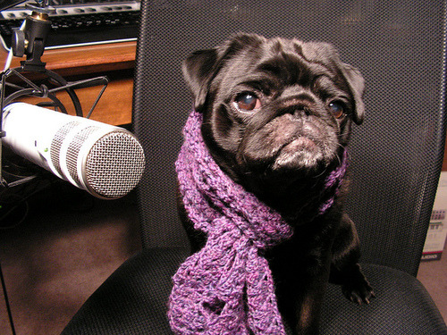 Hipster dogs love the studio. Making original hipster music.