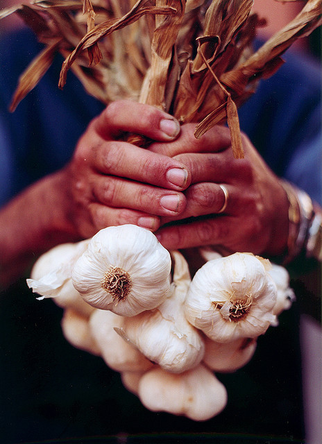Farmers Hands holding Garlic