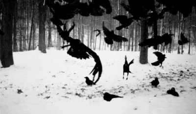 gothiccharmschool:  Crows in the snow!