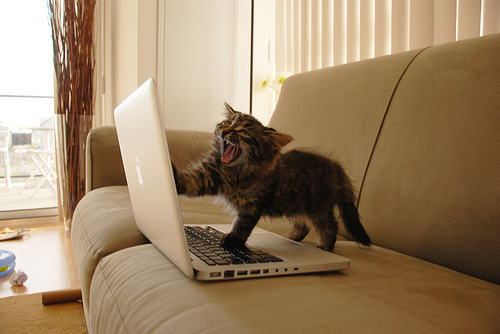 kitty just discovered tumblr