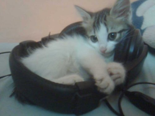 fuckyeahfelines:  My Sally, when she was only 5 months old ♥