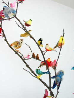 katespadeny:  think colorfully all the pretty birds