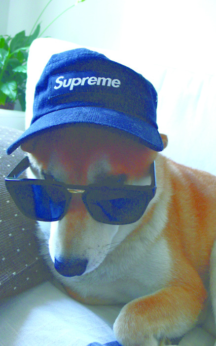 """I am supreme hipster dog."""