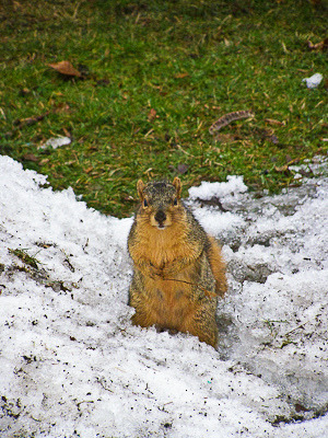 Happy for Spring on Flickr.A squirrel in the Cleveland Metro Parks in Spring, 2007.