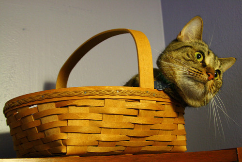 get out of there cat. that basket is not for you it is for pies. don't let the fact that we have never actually put a pie in there fool you. cats are not pies and that basket is for pies and that is that.