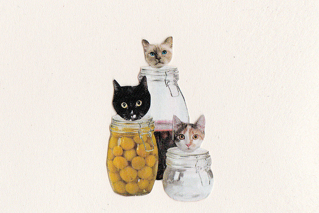 Cat jars by janevalena on Flickr.