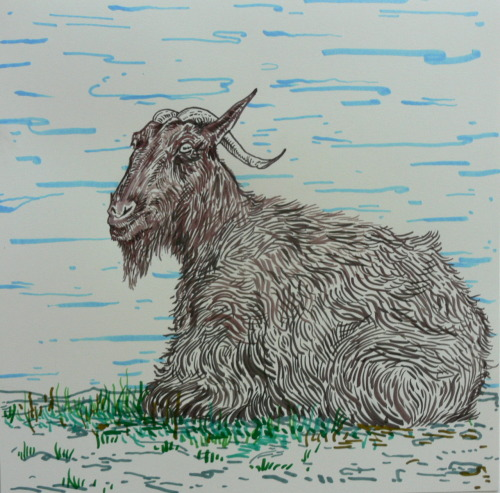Tim Wiesch needed a drawing of a goat. Ink, marker 12x12 in.