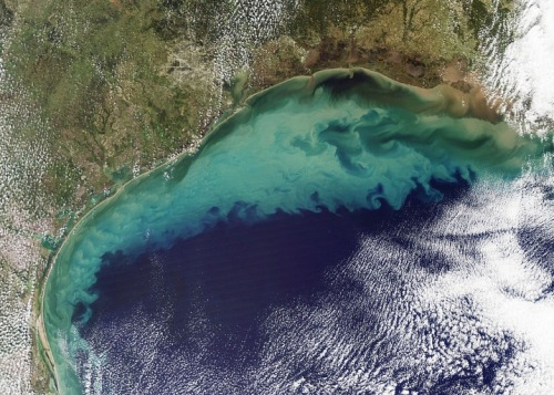 A dead zone the size of the state of New Jersey is growing in the Gulf of Mexico, fueled by nutrient runoff from the swollen Mississippi River. Scientists say it may become the largest dead zone ever.