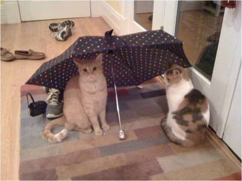 get out from under there cats. that umbrella is not for you. it's not even raining in here. and don't you know that having umbrellas open indoors is bad luck anyway? why are you trying to destroy my life cats?