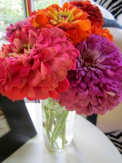 life-love-laughter:  gorgeous zinnias! {via deliciouslyorganized}