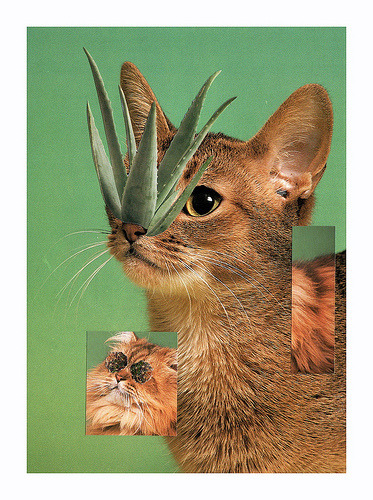 plantsandanimals:  Cat Shift Hand cut collage 2011