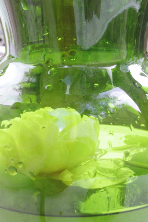 White flower floating in a green vase. (Photo by Theraisa K)