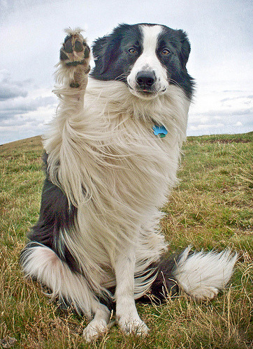books-and-animals:  A Windswept Wave! (by meg price)  What's up!?
