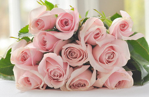 My favorite, pink roses :3