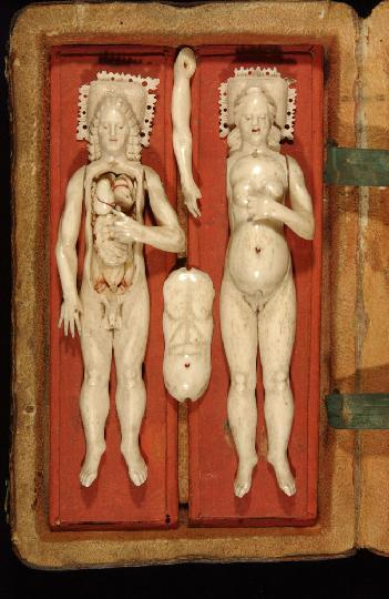 unnaturalist:  17th century ivory anatomical models