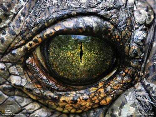 Crocodile Eye by National Geographic