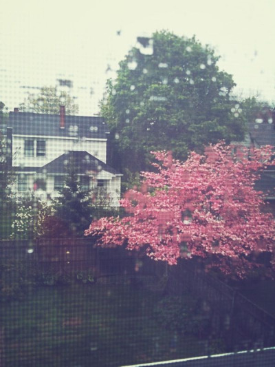 Hello springtime back yard. I forgot about that pink tree.  I watched as day turned to night and continued to watch the night turn back today … Freaking insomnia.