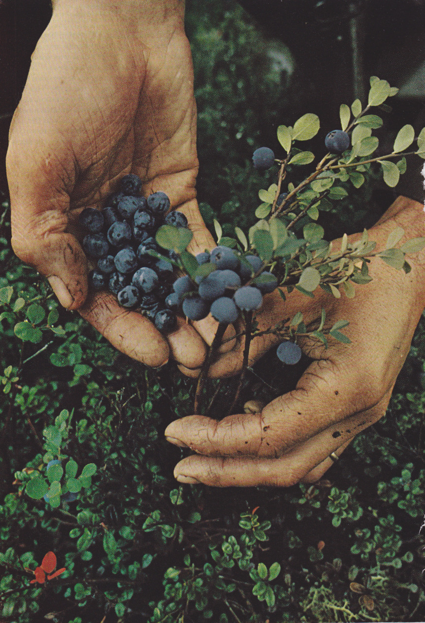 oldsoulswelcome:  Blueberries for Sal.