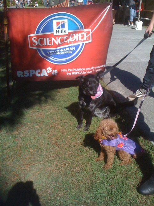 Mim and Jessie at the RSPCA Million Paws Walk.