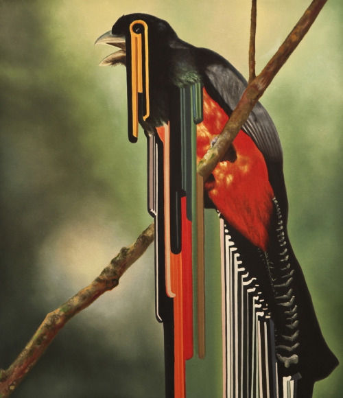 magnolius:  Bird rib by Maurizio Bongiovanni    oil on canvas