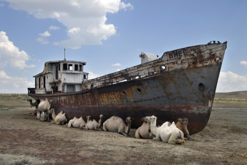 Ships of the Desert  Camels shelter from the hot sun under rusting shipwrecks near the village of Dzambul, a former fishing town on the shore of the Aral Sea near Aralsk in Kazakhstan, on June 17, 2007. The Aral Sea, once the world's fourth largest lake, gradually disappeared, since Soviet planners tapped the rivers Syr Darya and Amu Darya in the sixties in order to irrigate dry land in Uzbekistan and Turkmenistan. Fishermen changed their activities to cattle breeding. Thanks to the new Kok Aral dam, co-financed by the World Bank, the north, Kazakh part of the Aral Sea is slowly being refilled.  Source: http://www.visualcultureawards.com/libri/category/nature-architecture/