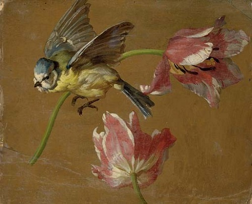 stilllifequickheart:  Alexandre-François Desportes Two Tulips and a Bluebird 18th century