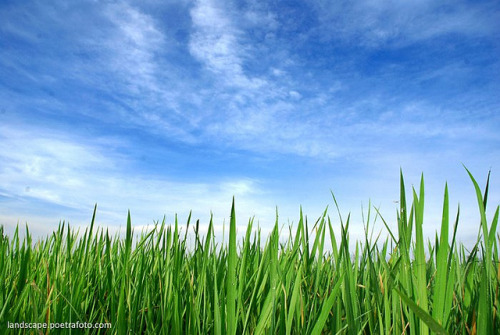 Foto Pagi Hijau Blue Sky in Indonesia by Poetrafoto Photography - Indonesia Photographer on Flickr.Foto Pagi Hijau Blue Sky in Indonesia