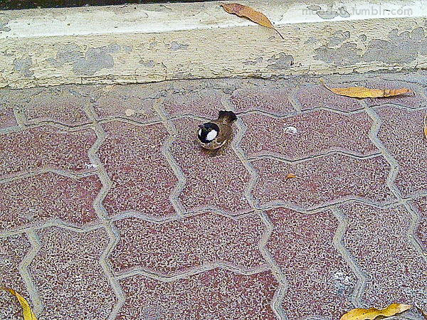 I was waiting outside the house and I saw that little bird