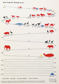 zero1infinity:  How long do animals live
