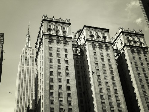The Empire State Building and the towers of 4 Park Avenue rising above birds in flight. Midtown, New York City.   —-  You can now also purchase my photography on a wide variety of merchandise (t-shirts, magnets, postcards, iPhone/iPad cases, posters, the list goes on). To view all of these  New York City gifts and products at my store, click here.