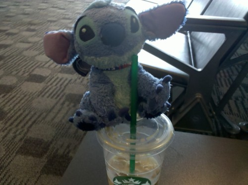 Stitch steals a sip of my Chai during our layover in Montreal. We were both very happy to find a Starbucks!