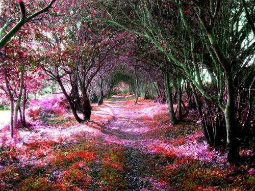 sofawned:  sunsurfer:  Magical Tree Tunnel, Sena, Spain photo from jchip8  I need to be in this space.
