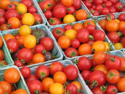 For all Montrealers - There is a huge tomato/plant seedling sale this saturday/sunday in the mile end. Stop by 5045 de l'Esplanade and check it out! More information here.   THE BIG TOMATO SALE EVENT Saturday May 27-Sunday May 28 10:00 a.m.-4:00 p.m.  Delicious and beautiful vegetable, herb and flower seedlings. Over 50 varieties of heirloom tomato plants. Rare and unusual varieties not easily found elsewhere. Grown without any chemical fertilizers or pesticides. Ready for your garden bed or container.