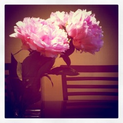 fresh cut peony take 2